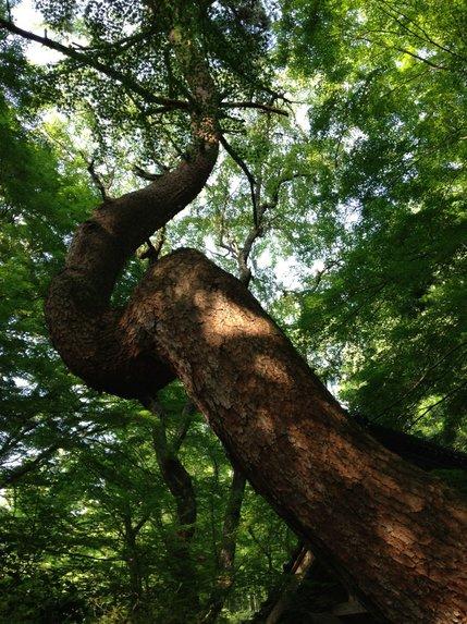 好きな木.jpg