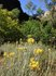 黄色い花とやま.JPG