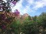 空と花.jpg