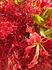 赤いお花.JPG