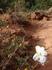 ザイオンのお花.JPG