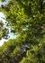 秋の木と.jpg