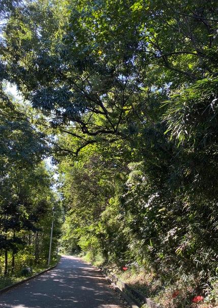 秋の道.jpg