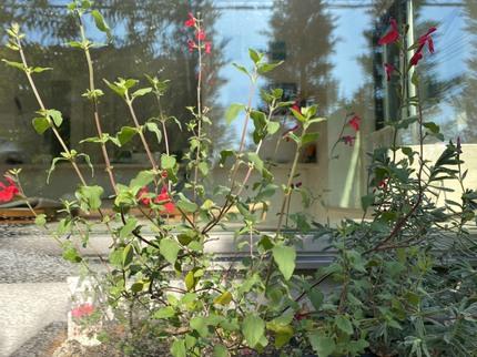 庭ミニ花壇.jpg